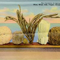 Six Varieties of Sponges, From Left: Wire, Wool, Silk, Grass (Vase), Yellow Postcard