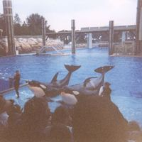 Shamu: World Focus Show at SeaWorld Orlando, 1998