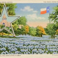 Texas State Capitol, The Texas State Flag, and Blue Bonnets, the Texas State Flower Postcard