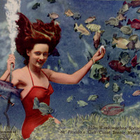 Weeki Wachee Spring on Florida's Gulf Coast Postcard