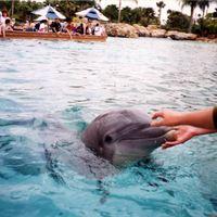 Dolphins at SeaWorld Orlando, 1998