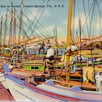 Sponge Fleet in Harbor, Tarpon Springs Postcard