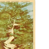 The Ghost Tree Postcard