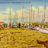 Sponges Along the Dock Postcard