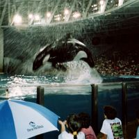 Baby Shamu Celebration Show at SeaWorld Orlando, 1990