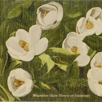 Magnolias (State Flower of Louisiana) Postcard
