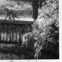 Baboon and Raccoon from Weeki Wachee's Jungle Cruise