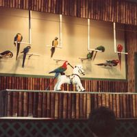 the exotic bird show at cypress gardens in june of 1989 billed as floridas first commercial tourist theme park cypress gardens opened on january 2 1936