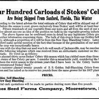 Four Hundred Carloads of Stokes Celery