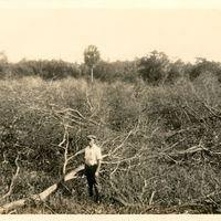 Isleworth Seedlings, 1924