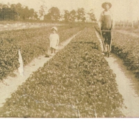 Robert Floyd King and Minnie Lee King at a Black Hammock Celery Field