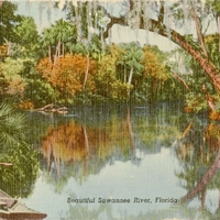 Beautiful Suwannee River Postcard
