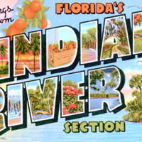 Greetings from Florida's Indian River Section Postcard