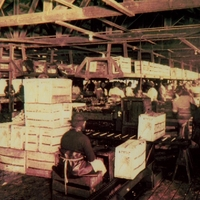 A. Duda and Sons Celery Packing House