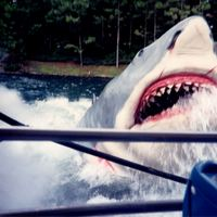 Jaws at Universal Studios Florida, 1991