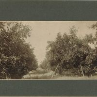 DeForest Grove Citrus Trees