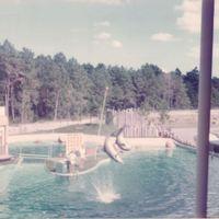 Dolphins at SeaWorld Orlando, 1974