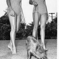 Weeki Wachee Mermaids with Boar on Leash