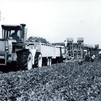 A. Duda and Sons Mule Train